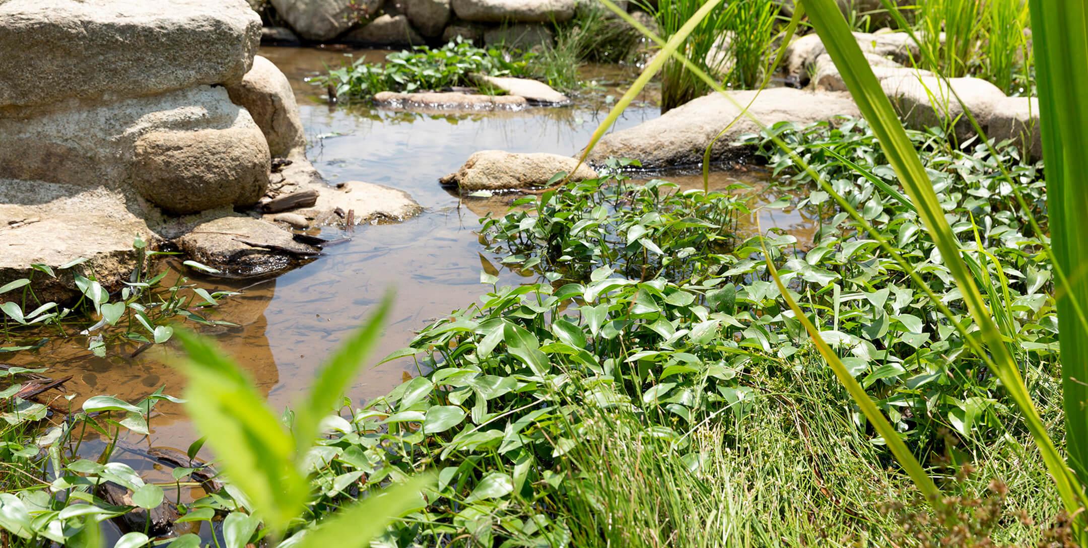 「いちべえ沼」の形をした池